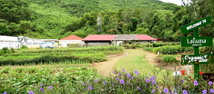 Laguna Lăng Cô, Organic Farm Tour