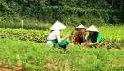sustainability-organic-farm-laguna-lang-co-photo03