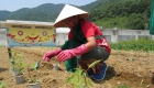 sustainability-organic-farm-laguna-lang-co-photo04