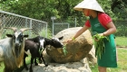 sustainability-organic-farm-laguna-lang-co-photo05