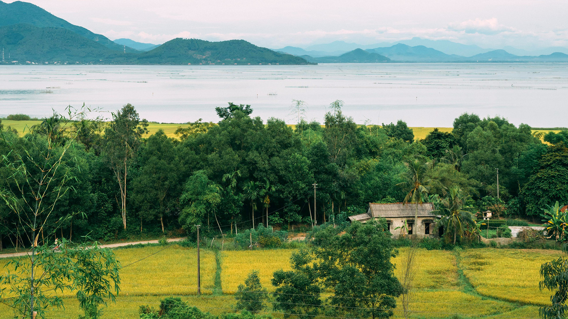 Cánh đồng lúa bên phá Tam Giang